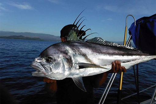 Mike Vos Sr. With Roosterfish. Maria Teresa Sportfishing.