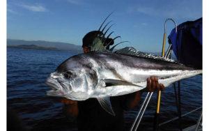 Roosterfish. Los Barriles Fishing Charter. Maria Teresa